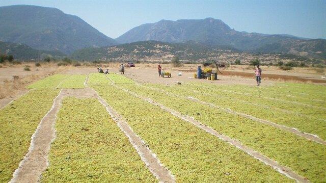 Tarımda istihdam arttı - Ekonomi Haberleri