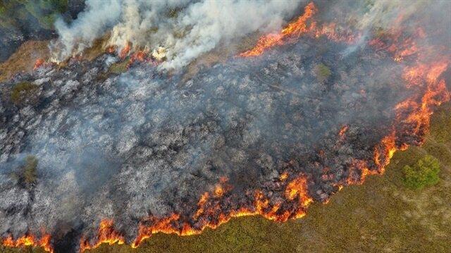 Sinop'ta çıkan orman yangında büyük bir bölge zarar gördü.