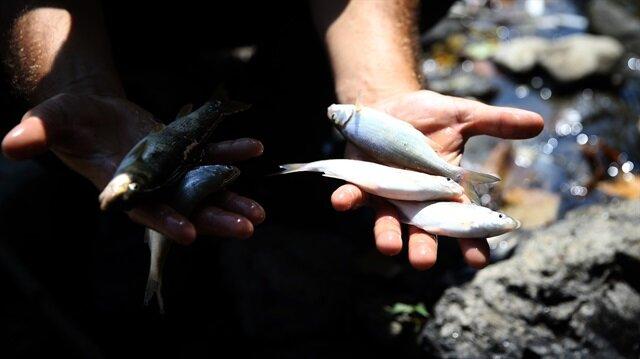 Melen Çayı'ndaki balık ölümleri korkuttu