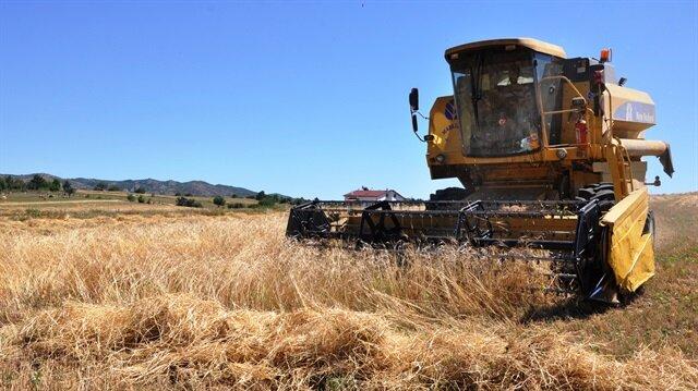 'Buğdayın atası' siyeze ilgi ekim alanını 10 kat artırdı