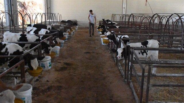 Diyarbakırlı Mustafa Fidan, Eğil ilçesinde devlet desteğiyle kurduğu çiftlikte günde 5 bin litre süt üretimi yapıyor.