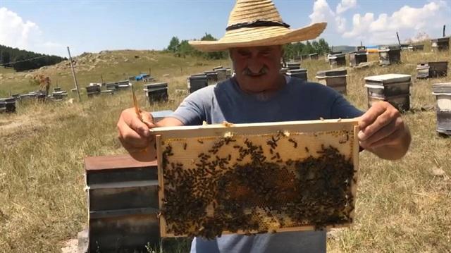 Kafkas Balının kalitesinin sırrı arının dilinde