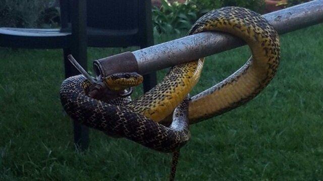 Kuş yuvasından yılan çıkması paniğe neden oldu.