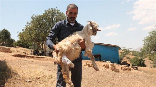 Elazığ'da trenin çarptığı 90 keçi telef oldu