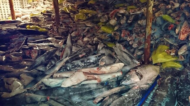 Geminin Galapagos deniz koruma alanında bugüne kadar yakalanan en büyük gemi olduğunu açıklandı.