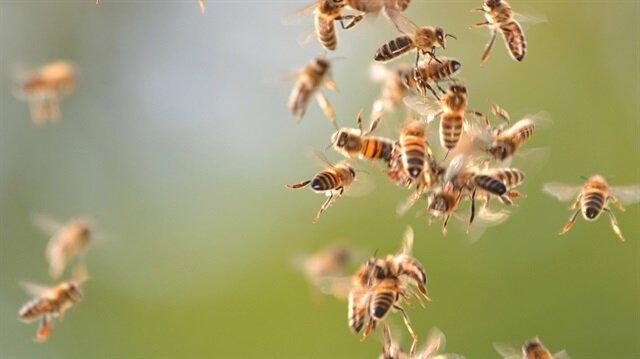 Arşiv: Arıların saldırısı tarlada bulunanların hastaneye kaldırılmasına yol açtı.