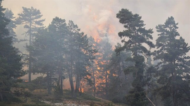 Bilecik'e sıçrayan orman yangını sürüyor