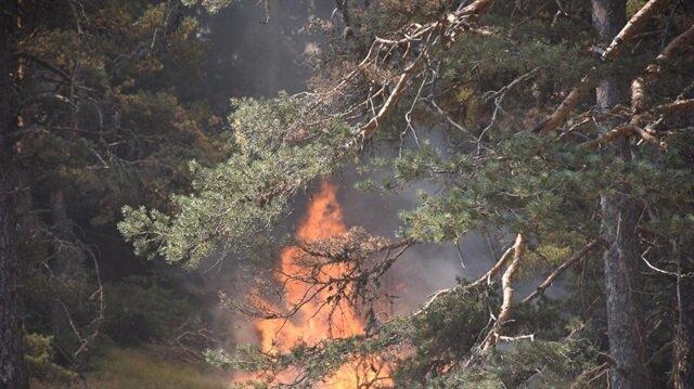 Sakarya'daki orman yangını kontrol altında-Sakarya haber