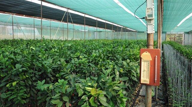 Çukurova'da örtü altı üretim yaygınlaştırılarak ihracatta söz sahibi olunması hedefleniliyor.