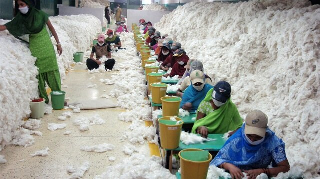Hindistanlı pamuk işçileri