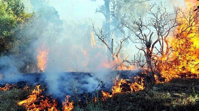 Kütahya'daki orman yangınından bir fotoğraf