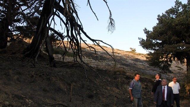 Kütahya'da ormanlık alanlara giriş çıkış yasağı getirildi