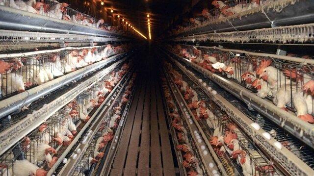 Yumurtası bile Türkiye'den