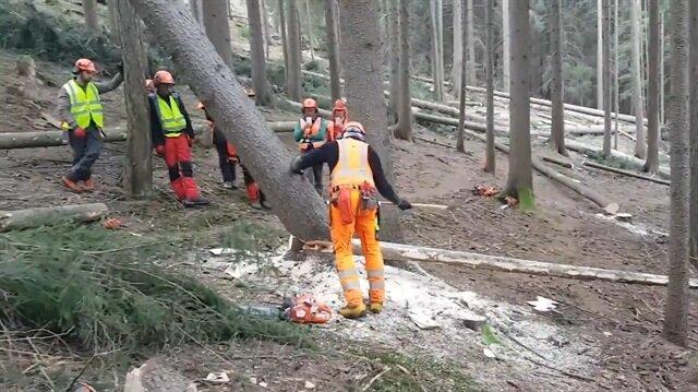 Ağaç kesmenin en kolay yolu