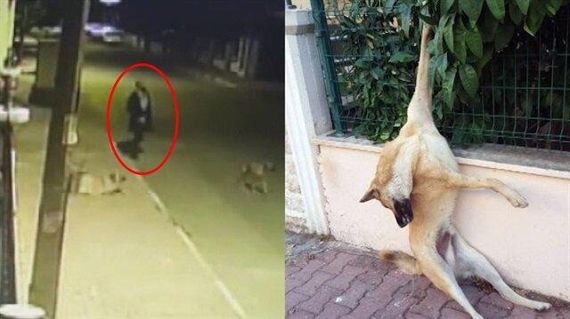 Sokak köpeğini patisinden korkuluklara çivilediler!