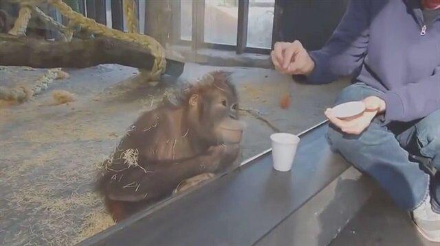 Orangutanın illüzyona verdiği tepki sosyal medyayı salladı