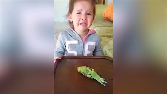Ölen muhabbet kuşuna ağlayan minik yürekleri burktu
