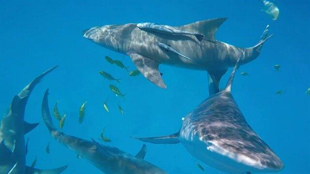 Balıkçının kamerasına köpekbalığı saldırdı!