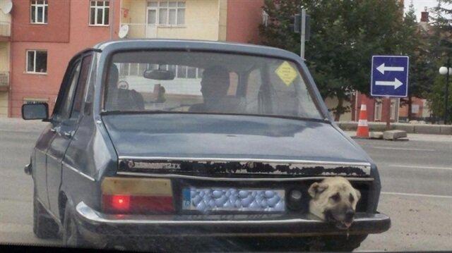 Bagajda yolculuğa mahkum edilen köpek hava almaya çalışıyor.