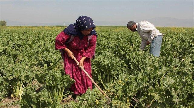 Tarım işletmeleri yüzde 50 ya da daha fazla büyüdüğünde ilave destekler sağlanacak.