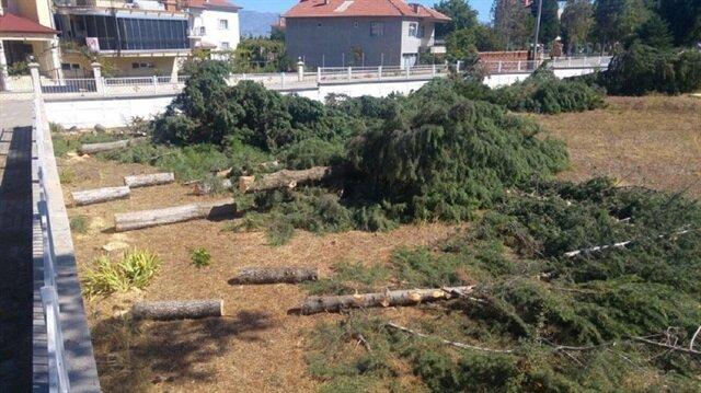 Denizli'de kesilen ağaçlar.