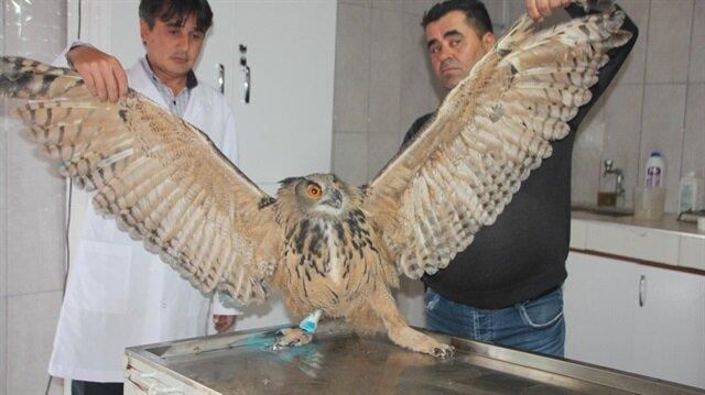 Yaralı puhu kuşu tedavi altına alındı.