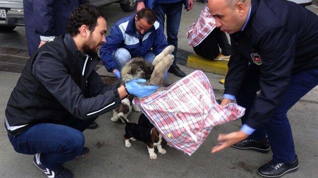 Pazar çantasının içerisinde yurda sokulmak istenen köpek yavruları yakalandı.