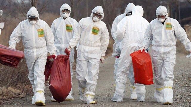 Güney Kore'de kuş gribi salgını ile ilgili görsel sonucu