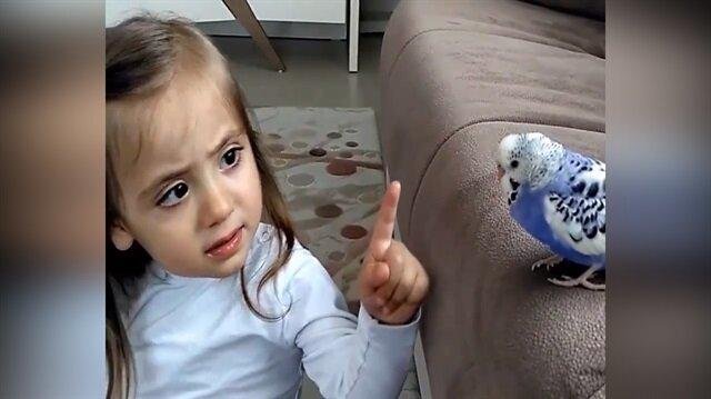 Dünya tatlısı miniğin muhabbet kuşuyla kavgası