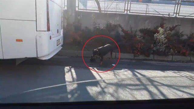 Suçüstü yakalanan köpek bakın ne yaptı