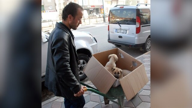 Hasta köpekleri veterinere el arabasıyla taşıyan koca yürekli adam