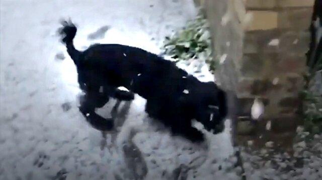 İlk kez kar gören köpeğin ilginç tepkisi