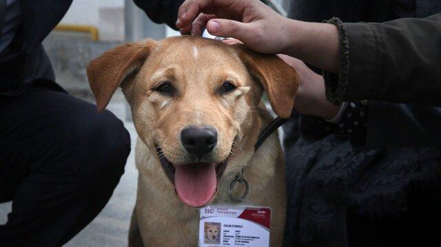 Sokak köpeğiydi üniversiteye 'bekçi' oldu