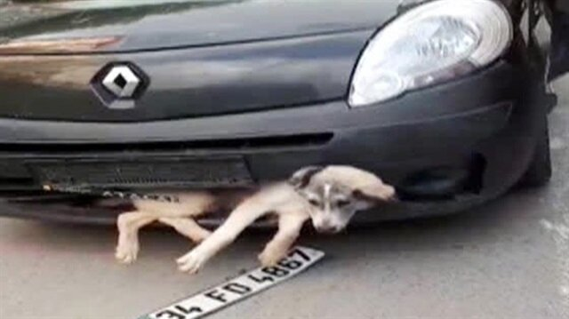 Tampona sıkışan köpek ile kilometrelerce gitti