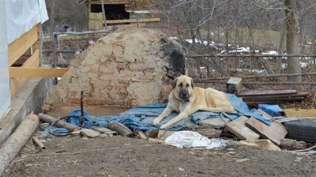 Haber alınamayan ailenin köpekleri enkazdan ayrılmıyor