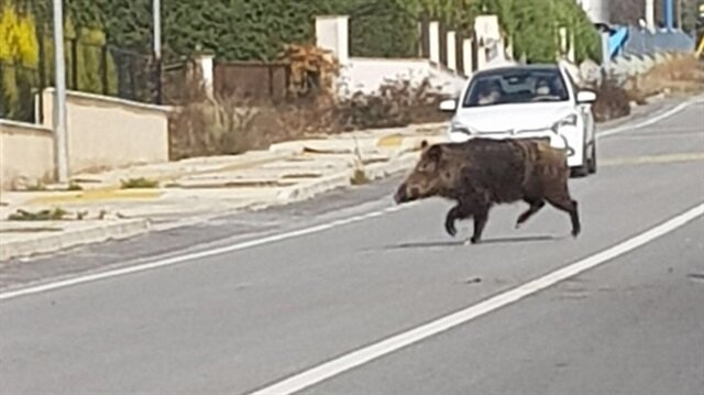 İzmir'de sürücülere zor anlar yaşattı