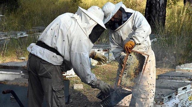Üreticiler ana arı başına 15 lira alacak.