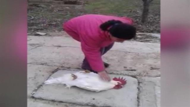 Ölü taklidi yaparak küçük kızı trolleyen horoz