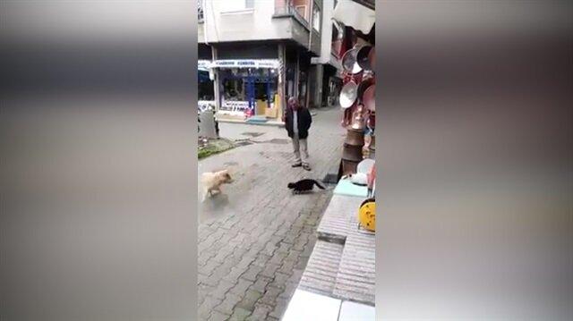 Karadeniz kedisi böyle olur!
