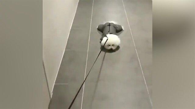 Direnme işini zirveye çıkaran sevimli köpek