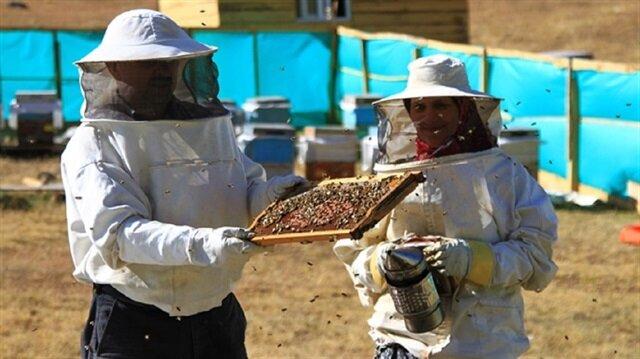 تركيا تصدر 24 مليون دولار من العسل إلى 45 دولة