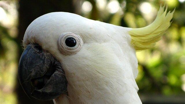 """""""طيور الدمار الشامل"""" تثير الذعر فى استراليا"""