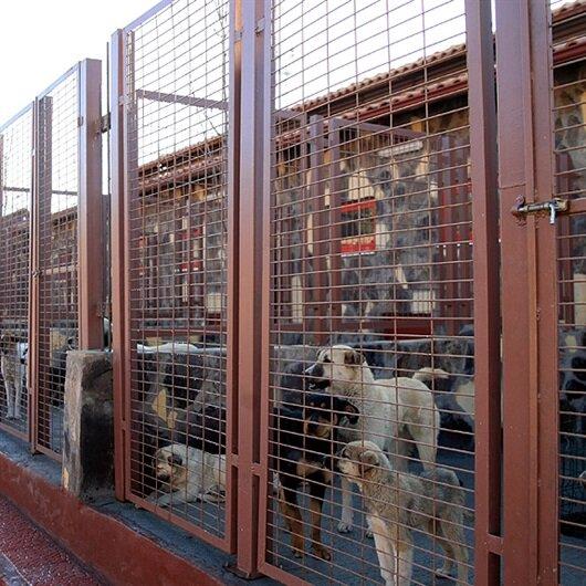 Sokak hayvanlarına konforlu barınak