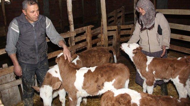 Çalınan hayvanlar, jandarma ekiplerince kısa sürede bulunarak sahiplerine teslim edildi.