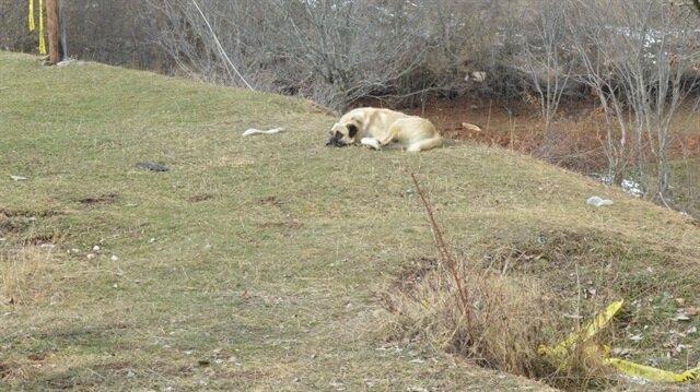 Yakılarak katledilen Çataloğlu ailesine ait çoban köpekleri, belediye ekiplerince enkaz alanında olayın üzerinden 17 gün geçtikten sonra yakalanarak rehabilite edilmek üzere barınağa yerleştirilmişti.