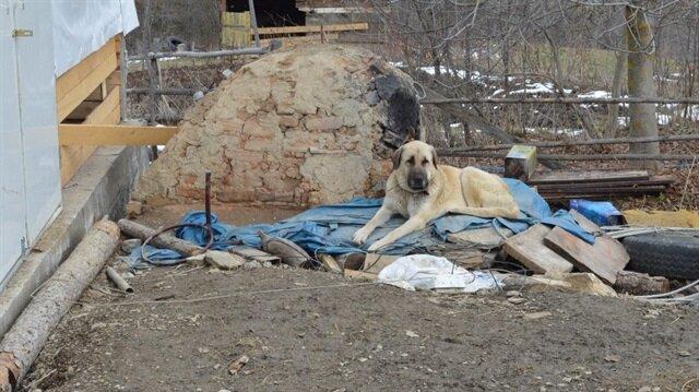 Köpeklerin enkazdan ayrılmaması adeta katliamı anlatmış