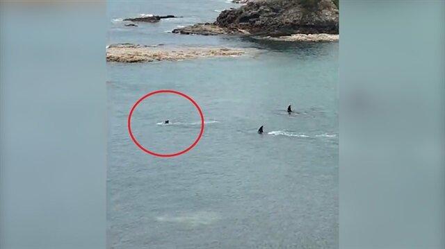 Yürekleri ağza getiren görüntüler: Dev köpek balıkları iki çocuğu görünce...
