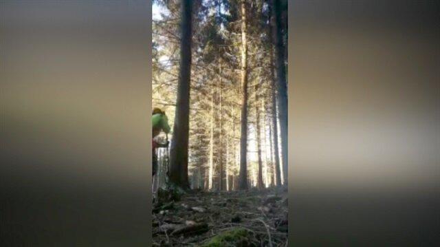 Domino etkisiyle ağaç kesen adam