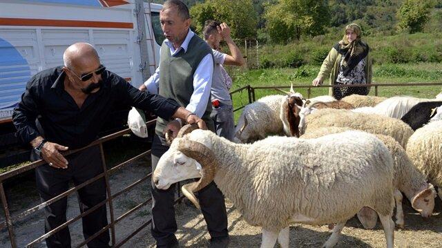 300 koyun+maaş heyecana yol açtı