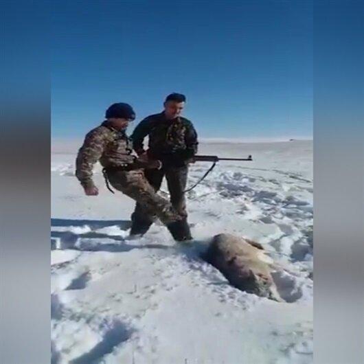 Avda dehşet anları: Ölü sanılan kurt avcıya böyle saldırdı!
